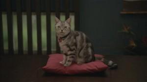 大和ハウス工業のCMに登場する新キャラクター。「彼女は猫じゃないよ、ダイワニャンだ」