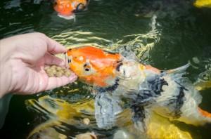 画像:【都内近郊】鯉に癒されるおでかけスポット5選