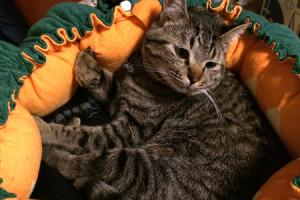画像:桃太郎は桃から、かぐや姫は竹から、うちの子はキャベツから!?ペットの可愛さが増すベッド発売。