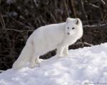 見るだけで癒される!世界で最も可愛い動物7選 画像1