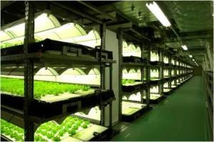 ASEANに向けた植物工場輸出事業を開始~シンガポール18店舗でテストマーケティング開始~ 画像1