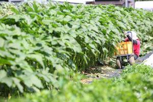 自然、そして人に向き合う「久松農園」の野菜づくり 画像1